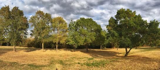 piccolo boschetto in autunno