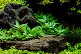 Aquarium background, Colorful underwater plants - 123223456
