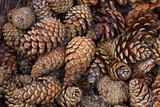 dried natural pine cones