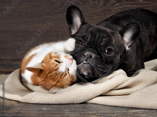 Poster Funny cat and dog lying on the floor, playing hugging each other