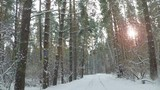 Winter forest road and sun. Slowmotion