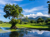Picturesque landscape with rice field and mountains. Sri Lanka