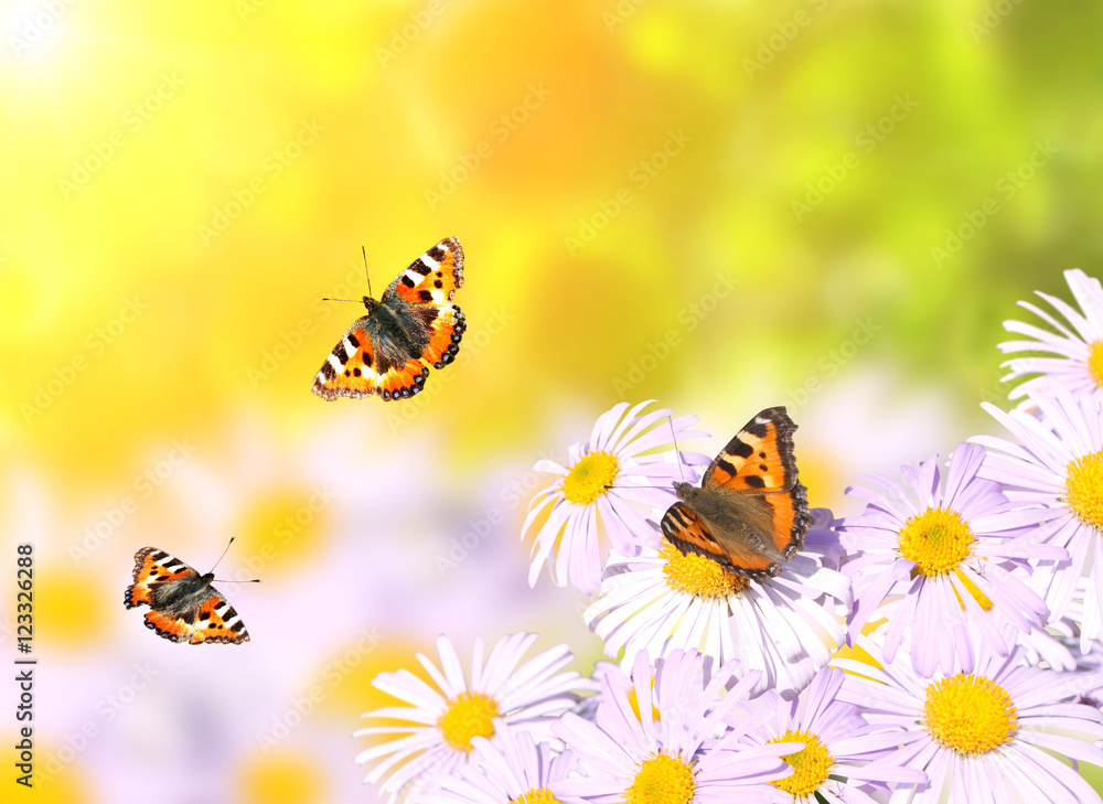 Recess Fitting Butterflies Flying Over Flowers Nikkel Art