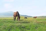 草千里ヶ浜 草を食む馬たち