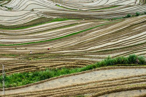 Foto op Canvas Guilin Lonjii rice terraces, Texture, Guilin, China