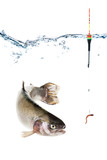 Fototapety Fishing concept, hook with bait and float, fish isolated on white