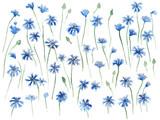 Cornflowers seamless watercolor background