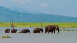 family of elephants; wildlife