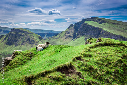 View to sheeps in Quiraing, Scotland, United Kingdom Poster
