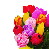 Fragment of floral bouquet from colorful tulips isolated on white background.