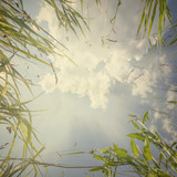 nature background - 123516889