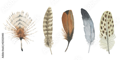 Watercolor bird feather from wing isolated. Aquarelle feather for background, texture, wrapper pattern, frame or border. - 123525443