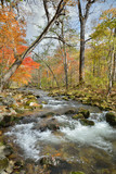 Autumn woodsy river 10