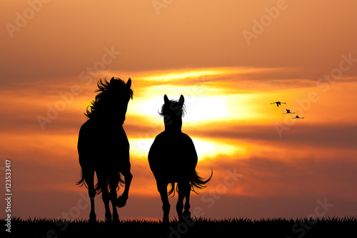galloping horses at sunset