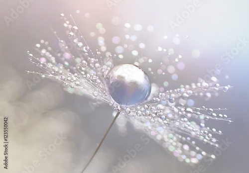 Beautiful dew drops on a dandelion seed macro.  Beautiful blue background. Large golden dew drops on a parachute dandelion. Soft dreamy tender artistic image form. - 123550042