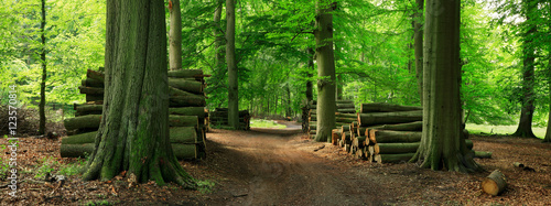 Fototapety, obrazy : Piles of Lumber along Dirt Road through Green Forest