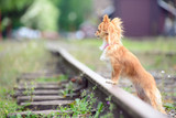 Small sad russet dog waiting on the railroad