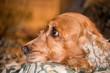 dog puppy nose macro detail close up