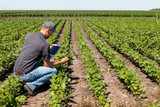 Agronomist Using a Tablet in an Agricultural Field - 123652875