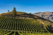 Vineyard near Okanagan Lake near Summerland British Columbia Canada