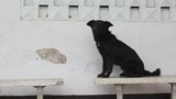 cute black dog sitting on a concrete bench with old white wall
