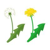 Dandelion vector icon