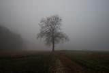 Giorno nebbioso ed invernale nel parco del Ticino, Galliate, Novara, Piemonte, Italia