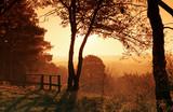 La malmontagne, forêt de Fontainebleau