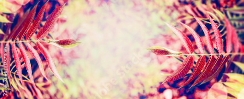Colorful autumn leaves at blurred nature background, banner