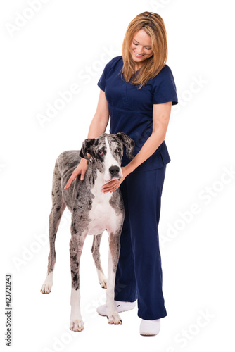 Obraz Veterinarian doctor nurse with great dane dog on white