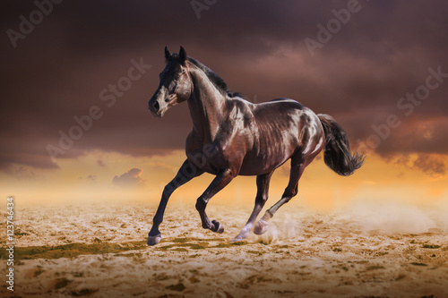 Poster Black horse galloping on the sand on sky background
