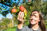Junge Frau pflückt Äpfel von einem Apfelbaum