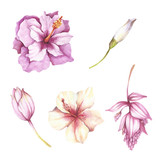 Set of tropical flowers. Hand draw watercolor illustration - 123766208