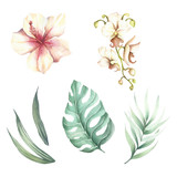 Set of tropical flowers and leaves. Watercolor illustration.