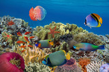 Coral garden with starfish and colorful tropical fish - 123774617