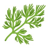 Dill icon in cartoon style isolated on white background. Herb an spices symbol stock vector illustration. - 123781272