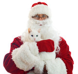 Santa Claus holding white cat. Space Isolated on white backgroun