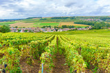 Fototapety Champagne Vineyards at sunset, Montagne de Reims, France