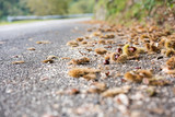 Chestnuts on the road