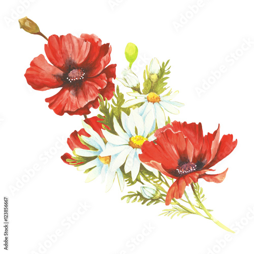 Bouquet with poppies and chamomiles. Hand draw watercolor illustration - 123856667