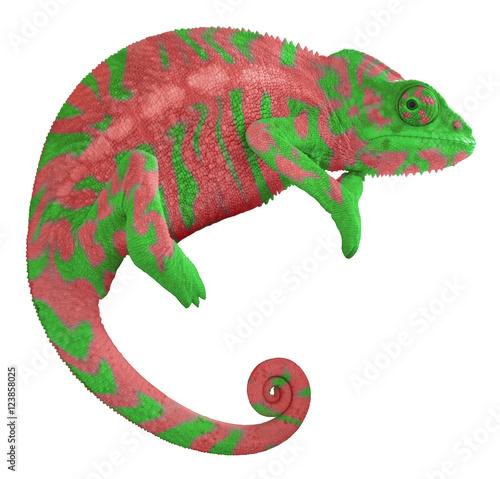 Plexiglas Kameleon Colorful Chameleon