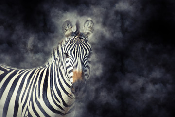 Zebra in smoke