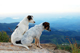 Two dogs on a cliff