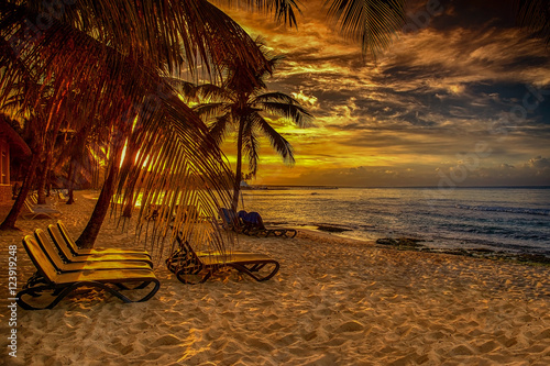 Billede caribbean beach with palm at sunset