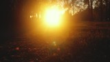 Autumn nature with leaves through the sun and road in the park in slowmotion. 1920x1080