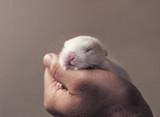Cute newborn baby bunny rabbit in man