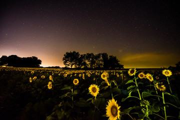 The Milky Way and other stars over Grinter's Farm - Lawrence, KS