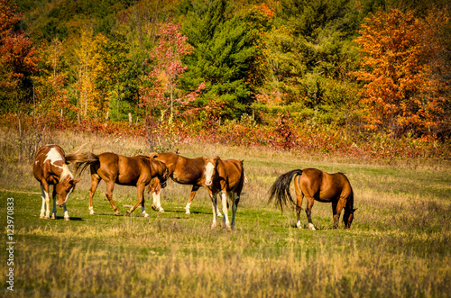 Horses surrounded by fall colors
