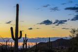 Saguaro National Park - 123972044