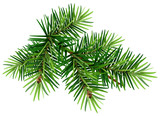 Green Christmas pine tree branch - 123995629
